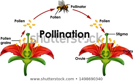 Diagram tonen bloem bee illustratie tuin Stockfoto © bluering
