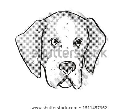 American Foxhound Dog Breed Cartoon Retro Drawing Stock photo © patrimonio