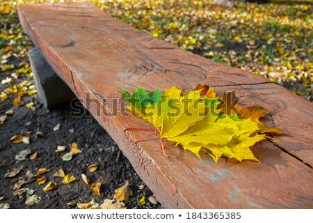 yellow maple autumn leaf lying in the faded foliage Stock photo © Alkestida