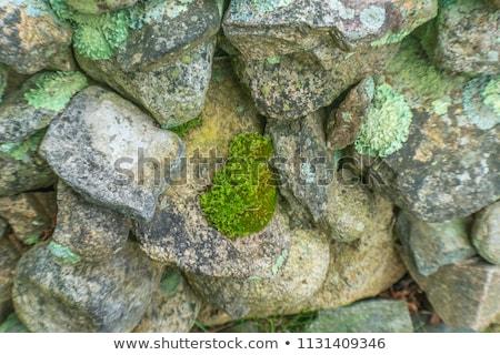 Mossy Stone Wall Stock photo © hamik