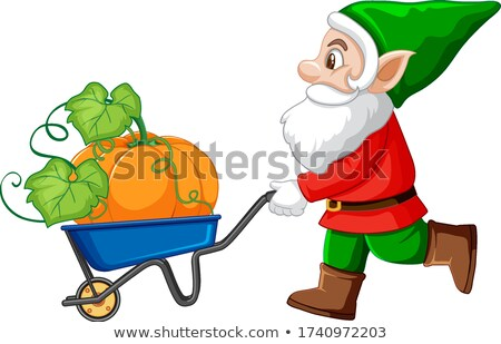 Gnome push haul cart and pumpkin cartoon character on white back Stock photo © bluering