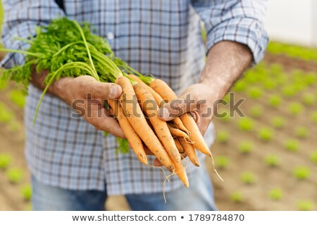 Farmer Showing Carrots And Vegetables To Camera In Greenhouse Stock photo © diego_cervo