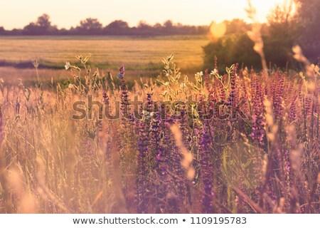 nyár · mező · vidéki · út · zöld · búza - stock fotó © lypnyk2