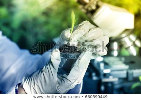 флора · лаборатория · природы · медицина · завода · лаборатория - Сток-фото © JanPietruszka