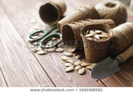 Planting Seeds in Peat Pots Stock photo © StephanieFrey