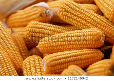 Monte milho pronto verão fazenda agricultura Foto stock © taviphoto
