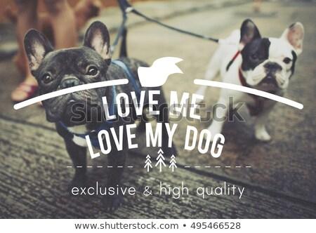 Stok fotoğraf: Love Me Love My Dog