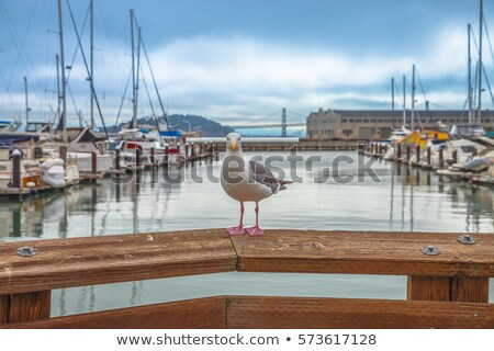 Golden · Gate · Bridge · vela · barcos · San · Francisco · veleros · torre - foto stock © billperry