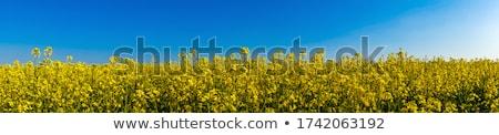 Veld panoramisch bloem Blauw kabel Stockfoto © unweit
