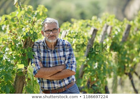 Winegrowers in the vineyard Stock photo © photography33
