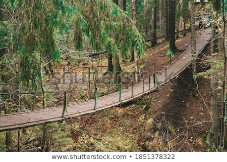narrow cable suspension footbridge stock photo © juniart
