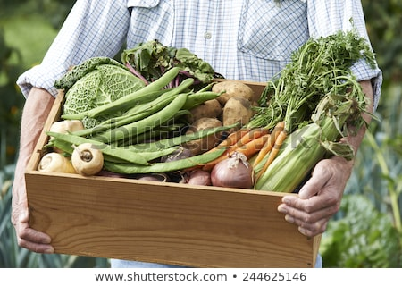 Senior Man On Allotment With Box Of Home Grown Vegetables Stock photo © HighwayStarz