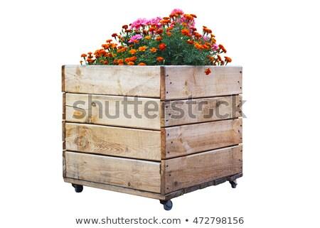 Wooden flowerpot isolated stock photo © entazist