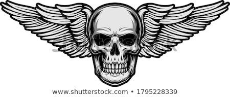 winged skull illustration Stock photo © lineartestpilot