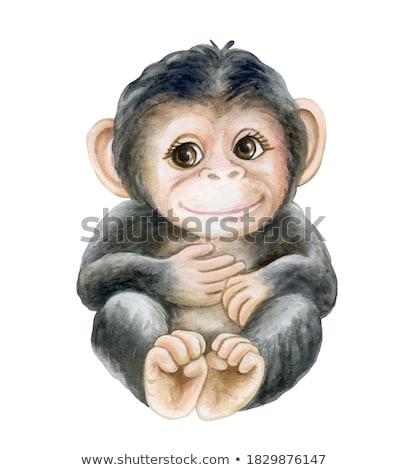 monkey with baby monkeys stock photo © adrenalina