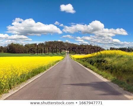 blossom country road stock photo © olandsfokus