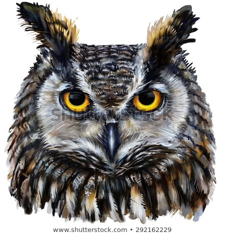 owl close up portrait digital drawing stock photo © kirill_m
