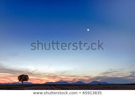 mező · fa · alkonyat · égbolt · Németország · fény - stock fotó © fisfra