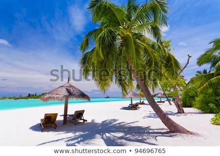 パラソル ヤシの木 熱帯 ストックフォト © Wetzkaz