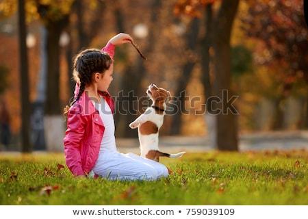 menina · jogar · cão · verde · gramado · parque - foto stock © is2