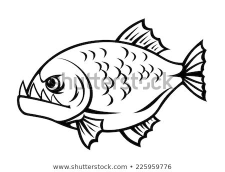 düh · piranha · éles · fogak · rajz · halászat - stock fotó © nikodzhi