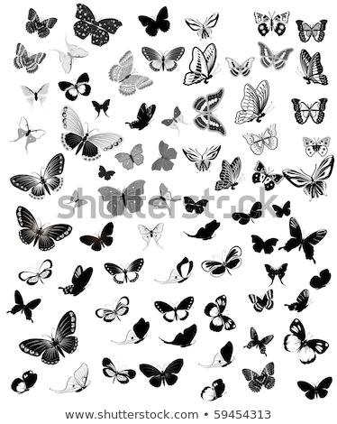 стилизованный Swirl бабочки набор вектора формат Сток-фото © balasoiu