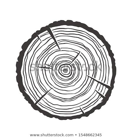 Wood tree rings Stock photo © luissantos84