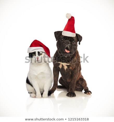 cute christmas couple of cat and dog wearing santa caps Stock photo © feedough