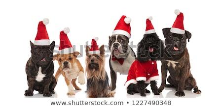 Stock foto: Gruppe · unterschiedlich · Hunde · tragen · Kostüme