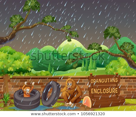Scene with two orangutans in the zoo on rainy day Stock photo © colematt