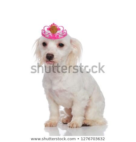 好奇心の強い 着用 王女 クラウン ハロウィン 座って ストックフォト © feedough