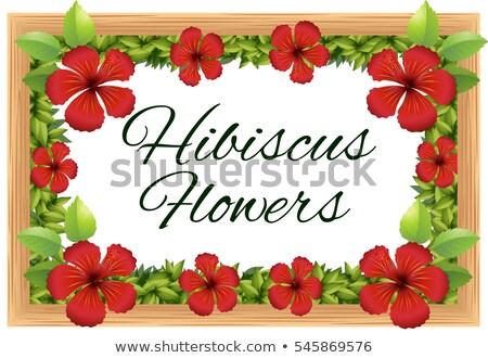 Hibisco flores alrededor marco de madera ilustración flor Foto stock © colematt