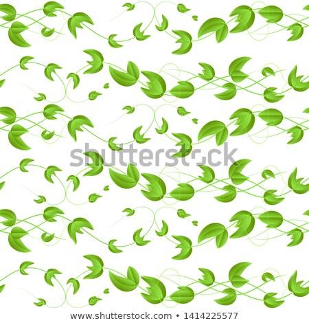 孤立した · 白 · ベクトル · 食品 · 健康 · 緑 - ストックフォト © pikepicture