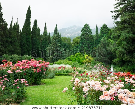Tree Growing in Garden, Bushes with Roses Flowers Stock photo © robuart