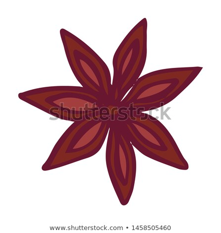 Coffee Shop, Aromatic Ingredient, Canella Vector Stock photo © robuart