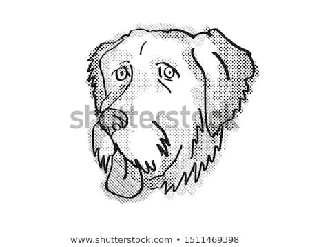 Aussiedoodle Dog Breed Cartoon Retro Drawing Stock photo © patrimonio