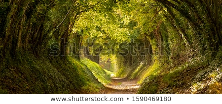 Pathway through the forest Stock photo © njnightsky