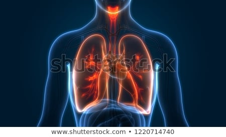 Human Lung  Pneumonia Stock photo © Lightsource