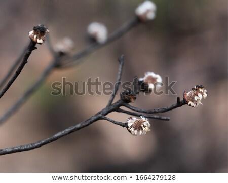 Zaad bush brand nieuwe geboorte flora Stockfoto © lovleah