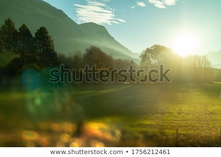 Natural landscape with trees, mountains and blurred forefront, Austria. Stock photo © artjazz