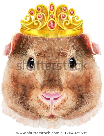 Watercolor portrait of Teddy guinea pig with golden crown on white background Stock photo © Natalia_1947
