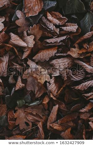 Kuru meşe yaprakları ilk sonbahar yeşil ot Stok fotoğraf © wildman