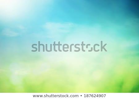 Resumen primavera flores de primavera amor hierba feliz Foto stock © orson
