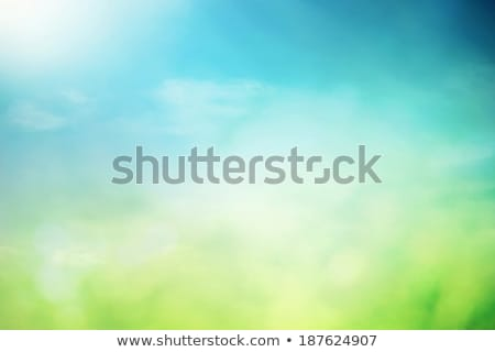 зеленая · трава · цветы · белый · аннотация · вектора - Сток-фото © orson