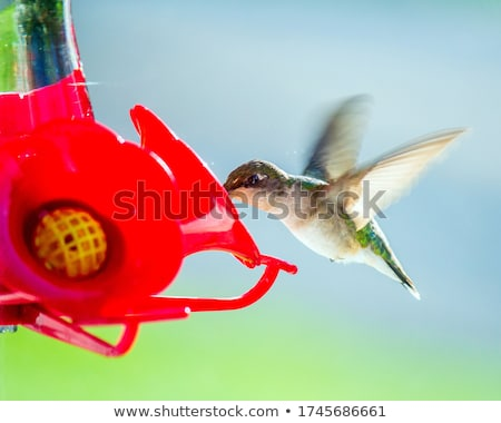 A hummingbird eating at a feeder. Stock photo © mybaitshop