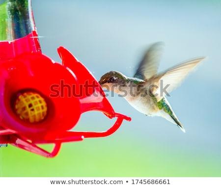 ハチドリ · 飛行 · 分離 · 鳥 · 影 · 高速 - ストックフォト © mybaitshop