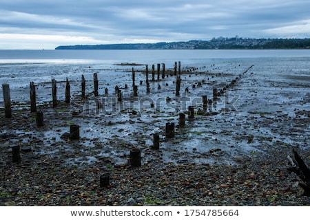 marine rock on docks barnacle stock photo © lunamarina