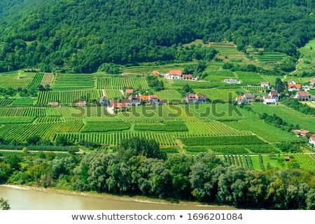 szőlőskert · alsó · Ausztria · tájkép · növények · szőlő - stock fotó © lianem