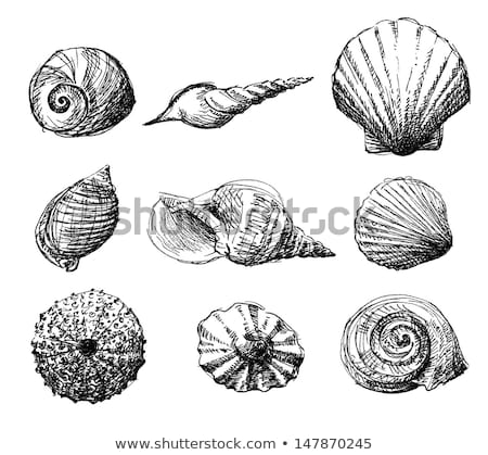 Hand Drawn background with see shell Stock photo © Elmiko