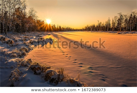 Winter Dawn Trees Stock photo © rghenry